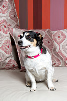 Dog Photographer Watford Hertfordshire